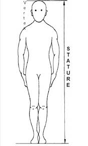 Stature (total height) represents the vertical distance from vertex ...