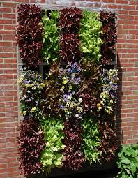 Walled Kitchen Garden Vertical Lettuce Wow I Wonder How Well This Would Work In Az I