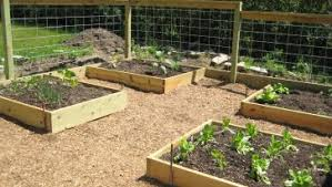Small Picture Vegetable Garden Box Designs Simple Vegetable Garden Box Designs