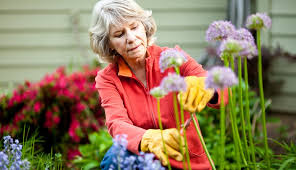 how to plant a cut flower garden this