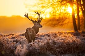 hd wallpaper background image id 360796 4960x3307 deer