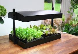 If you have limited space both outdoors and indoors, then consider growing  your plants in a set of cold frames or in a vinehouse. These are structures  that ...