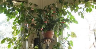 Full Size of Plant:7 Unique Non Toxic Houseplants Beautiful Indoor House  Plants 7 Unique ...