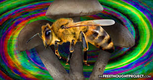 Image result for images bees foraging on mushrooms