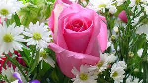 flowers Gennemsigtig grammatik ...