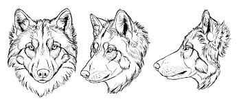 wolf drawing.  Drawing Howtodrawwolvesdrawinghead26 With Wolf Drawing