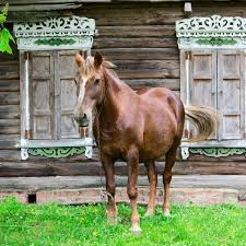 putting weight on older horses the 1