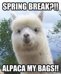 Image result for spring meme