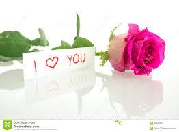 pink rose i love you