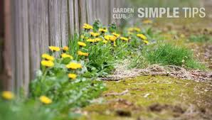 how to kill weeds in garden. weeds | the home depot\u0027s garden club how to kill in