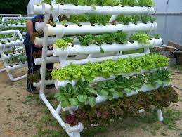indoor hydroponic gardening. Indoor Hydroponic Gardening New Hydroponics Garden Zandalusindoor Food Growing Systems
