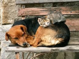 Risultati immagini per sterilizzazione cani e gatti