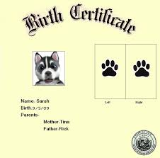 Dog Birth Certificate Roybvanegas Printable Pet Birth Certificate