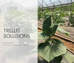 cover photo fore trellis solutions