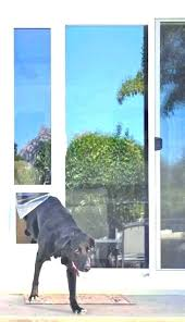 sliding door dog door inserts glass door door insert door for slider spectacular glass slider door