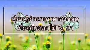 เรียนรู้สำนวนภาษาอังกฤษเกี่ยวกับดอกไม้ & ป่า