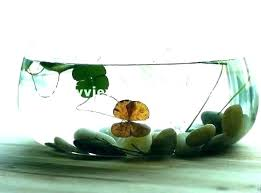 glass fish bowl vases centerpiece decorating ideas large decorative
