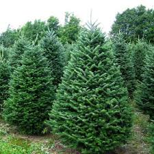 Christmas Tree Sale \u2013 Rowayton Gardeners