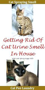 get rid of cat urine smell how to get cat smell out of house cat urine get rid of cat urine