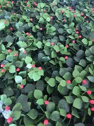 qvc garden reflections 8 panel 2m sq faux berries greenery living wall