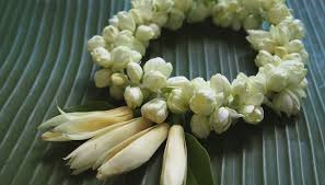 Image result for jasmine flower garland images