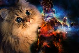 hd space cats wallpaper. Beautiful Cats Res 1920x1080  To Hd Space Cats Wallpaper M