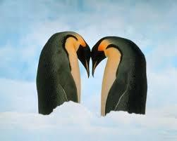penguin love wallpaper. Perfect Love Intended Penguin Love Wallpaper