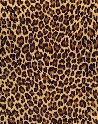 9 best cool carpet images on leopard area rugs