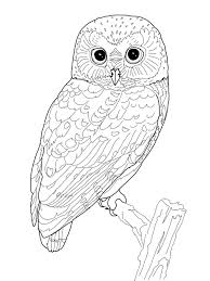 owl coloring pages. Beautiful Coloring Owl Coloring Pages To O