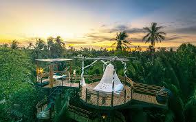 luxury tree house resort. Luxury Tree House Resort D