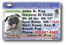 License Drivers Columbia British Columbia British