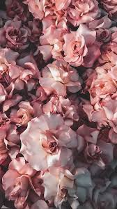 Rose gold wallpaper ·① download free amazing full hd. 45 Beautiful Roses Wallpaper Backgrounds For Iphone Flower Phone Wallpaper Rose Gold Wallpaper Iphone White Roses Wallpaper