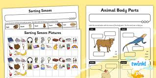 Science Animals Including Humans Year 1 Unit Home Learning Tasks