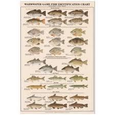 Chesapeake Bay Fish Identification Chart Fish Chart Amazon Com