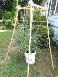Diy tomato cage Wood Everything About Everything Diy The Lazy Procrastinating Gardeners Tomato Cage Everything About Everything Everything About Everything Diy The Lazy Procrastinating