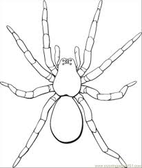 Small Picture Spider Coloring Pages 2 Spider Coloring Page Halloween Pages