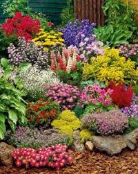 Small Picture Perennial Garden Plants so colorful so wish it was mine