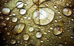funmozar water drops wallpapers