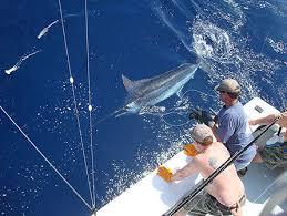 Fishing Seasons Release Sportfishing Excellent Year