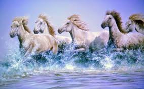 wild horses running through water. Perfect Through For Wild Horses Running Through Water H