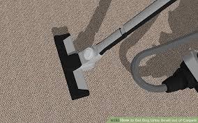 image titled get dog urine smell out of carpets step 15