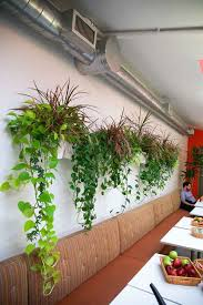 decorative plants for office. An Office Cantina With Wall Mounted Planters And Trailing Decorative Plants, Including Neon Pothos, Plants For C