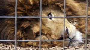 a speech essay persuasive topics about animals short brefash persuasive essay animal cruelty topics involving animals on cruelty 8c8886bd 4f42 41d4 9c8b d0a20be persuasive essay