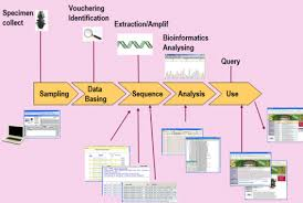 About Dna Barcoding