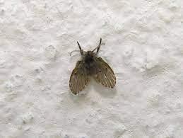 black flies in bathroom