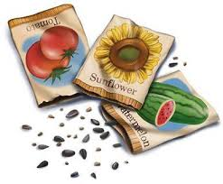 garden seeds.  Seeds John Scheepers Kitchen Garden Seeds SeedStarting Timetables With