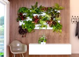 office gardening. Wonderful Gardening The Cluttered Office Filled With Folders As Tall Mount Everest And Pens  Scattered Homes In The Countryside We See Remnants Of Old Plants  Inside Office Gardening G
