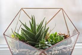 bring the outdoors inside geometric diy terrarium