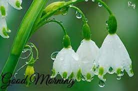 good morning rainy flowers pictures
