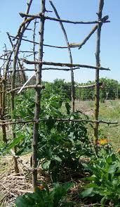 Diy tomato cage Wood How My Happy Homestead Wordpresscom Diy Tomato Cages My Happy Homestead